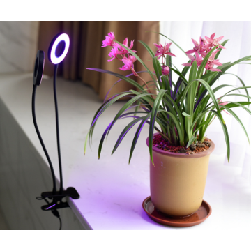 Home Office Grow Light con morsetto 40W