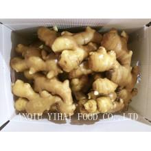 Exportation de gingembre frais de haute qualité