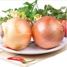 Im Jahr 2016 die neue Ernte frische Zwiebeln