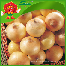 fresh onions on sale best price for red onions and yellow onions