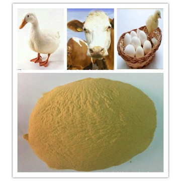 Hot Selling Yeast Powder Used in Feeds