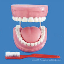 Human 4 Times Enhanced 32 Dental Dental Care Model (R080108)
