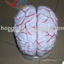 Modèle de l'artère cérébrale ISO, modèle d'anatomie du cerveau humain