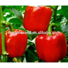 MSP211 Cambia semillas de pimiento rojo de primavera de alto rendimiento en semillas híbridas