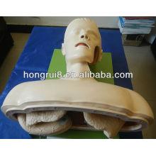 Mannequin d'entraînement à l'intubation de la voie aérienne ISO, entraînement à l'intubation