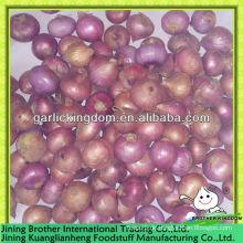 2-3cm China rote Zwiebel, kleine Zwiebel