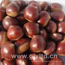 Chinese Fresh High Quality Chestnut