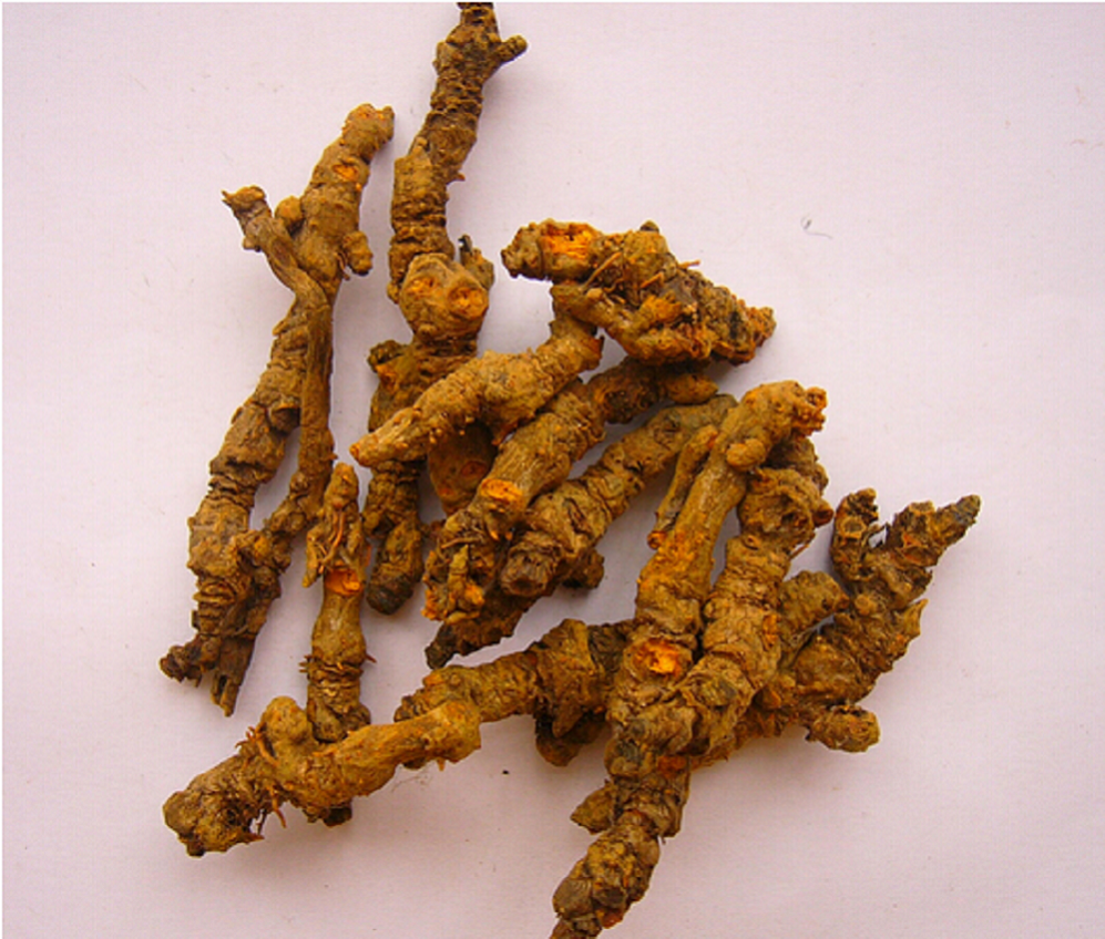 coptis chinensis extract