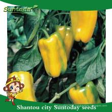 Suntoday vegetable F1 Organic up yellow bell sweet pickled jalapeno pepper habanero chilli vegetable syngenta seeds(21019)