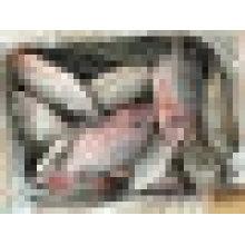 Ganze runde 500-800g gefrorene Chopa heiße Verkauf Tilapia