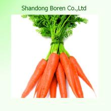 2015 Frische Baby-Karotten von Shandong China
