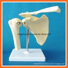 Модель анатомического моделирования плечевого сустава для медицинского обучения