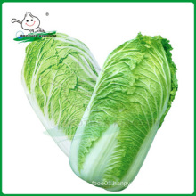 Fresh chinese cabbage/Cabbage from China/New crop cabbage