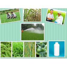 Сахарный тростник Широколистный гербицид Борьба с почвой Появление сорняков травы Аметрин
