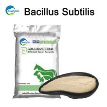 Venda quente Bacillus subtilis para alimentação animal