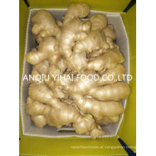 Anqiu Air-Dry-Ginger and Fresh Ginger for Sale