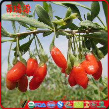 High export rate dried goji berries goji goji berry with low price