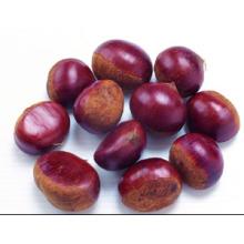 2015 Chinese Organic Fresh Chestnut