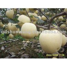 Class A fresh golden apple