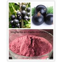 Extracto de grosella negra / aceite de grosella negra Nº CAS: 68606-81-5