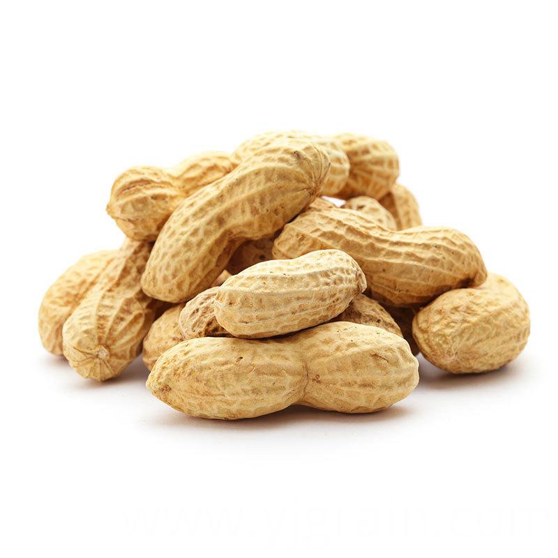 Groundnut Peanut