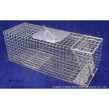 Gaiola de coletor de gato selvagem Metal dobrável para Trapping