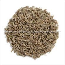 Cumin Seeds exporter