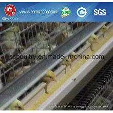 Automatic Galvanization Broiler Chicken Cage (H Type)