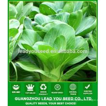 NPK07 Taoyu Qualität Pak Choi Samen für die Landwirtschaft