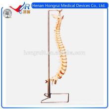 Modèle ISO Advanced Flexible Spine