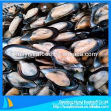 best frozen premium quality adequate half shell mussel