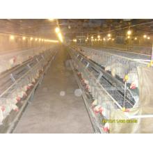 Galinha de aves de capoeira frango levantando equipamentos para venda