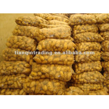 Fresh Organic holland potato