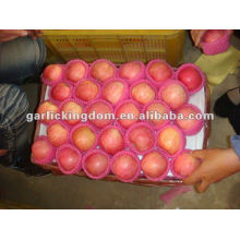 fresh yantai fuji apple