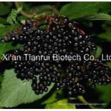 Elderberry Fruit Powder/Elderberry Extract Powder /Elderberry Fruit Juice Powder /Elderberry Powder