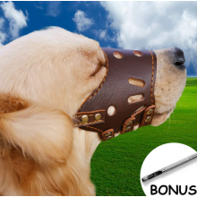 Cão focinho de couro usado com coleiras