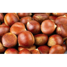 Big High Quality Fresh Chestnut Supplier From China