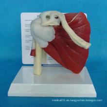 Hochwertiges medizinisches Anatomie-menschliches Muskelsystem-Modell (R040103)