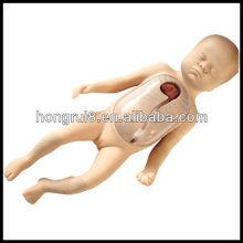 Modelo de treinamento de intubação periférica e de veia central neonatal avançada ISO
