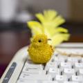 Decoração de pássaro natal