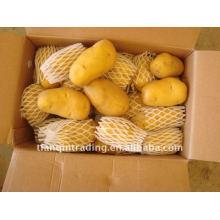 bonne pomme de terre fraîche à bas prix en Chine