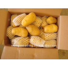 good fresh potato with low price in China