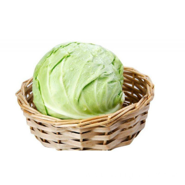 High Quality Organic Cabbage