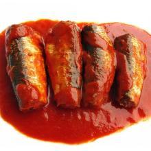 Sardinen in Dosen in Tomatensauce Fischkonserven