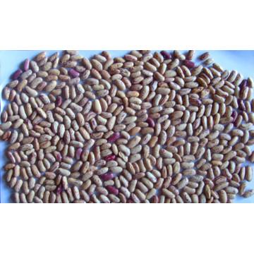 Exporting Grade Light Speckled Kidney Bean 200-240/G