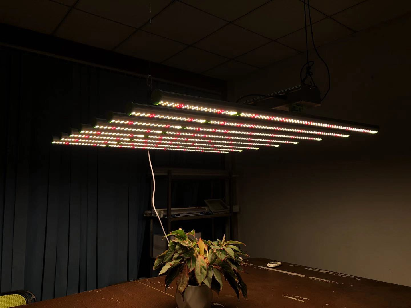 Grow Lamp vegetable