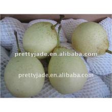new fresh su pear!