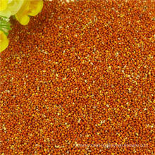 Dry Red Broom Corn Millet New Corp