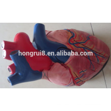 Анатомическая модель медицинского пластического сердца человека