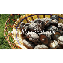Stemless 3-4cm Smooth Cap Dried Shiitake Mushroom